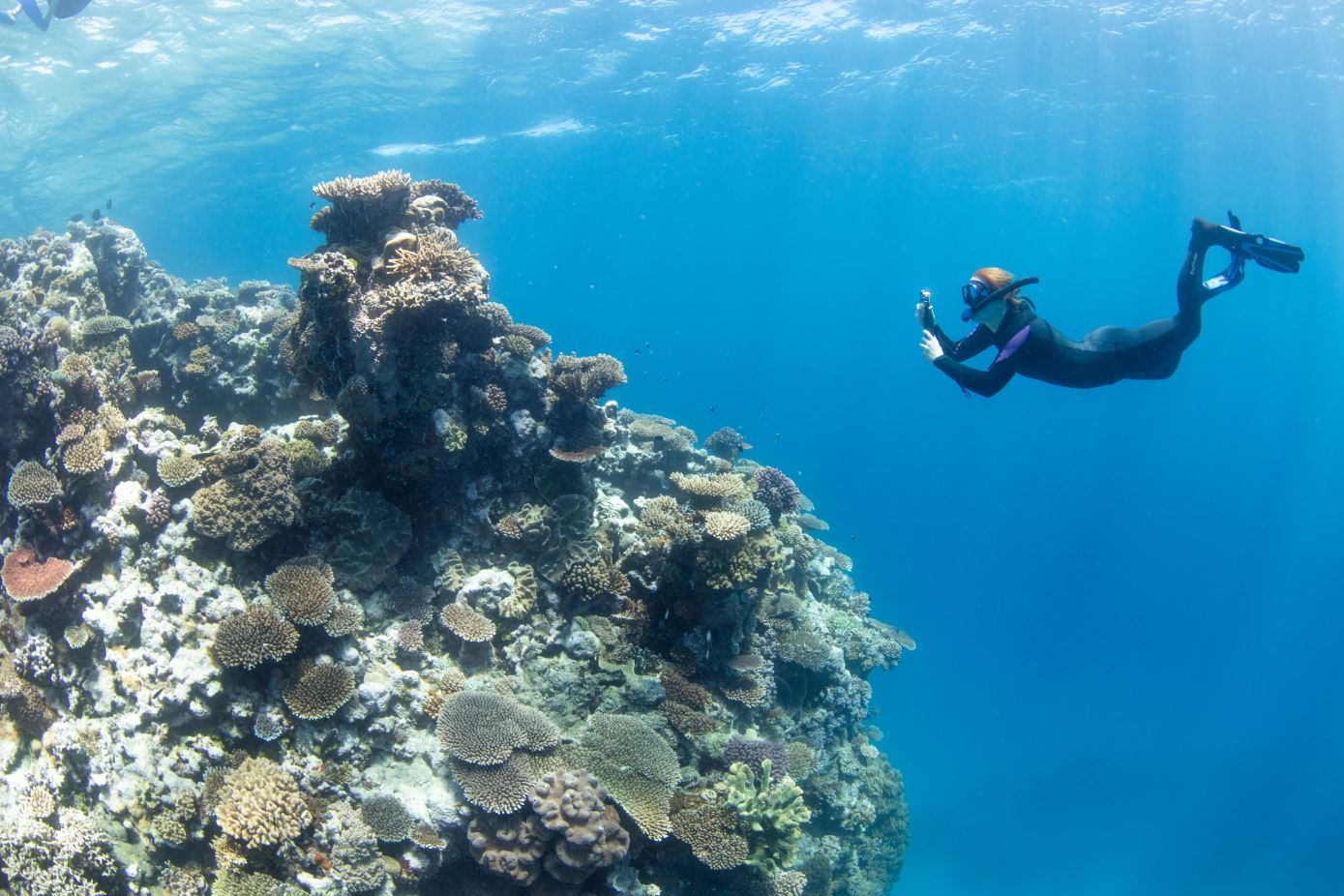 Great Reef Census launch, Milln Reef off Cairns 5 (must credit_ Citizens of the Great Barrier Reef)