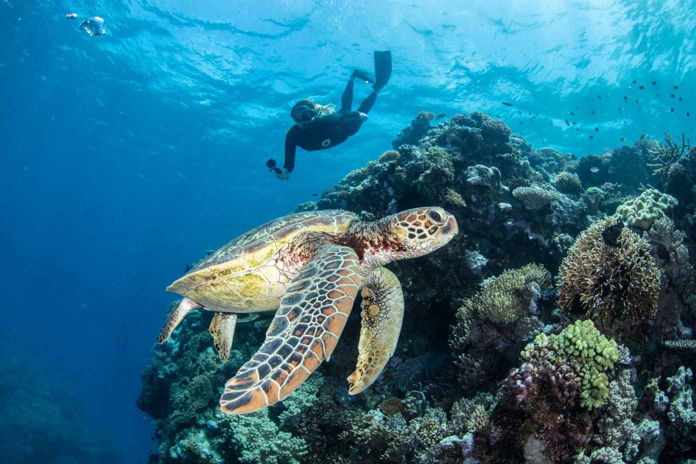 Great Reef Census participant spots a sea turtle, Milln Reef (must credit_ Citizens of the Great Barrier Reef)
